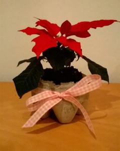 Etoile de Noël et son cache pot en béton